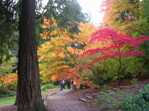 Arboretum_japanese_maples_in_oct