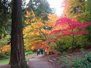 Arboretum_japanese_maples_in_oct