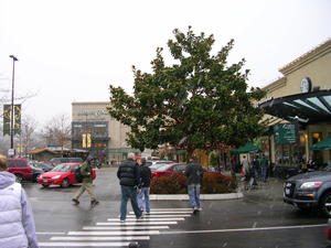 Snow_flurries_at_university_village